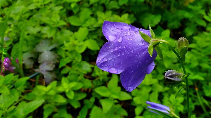 Niebieski kwiatek.