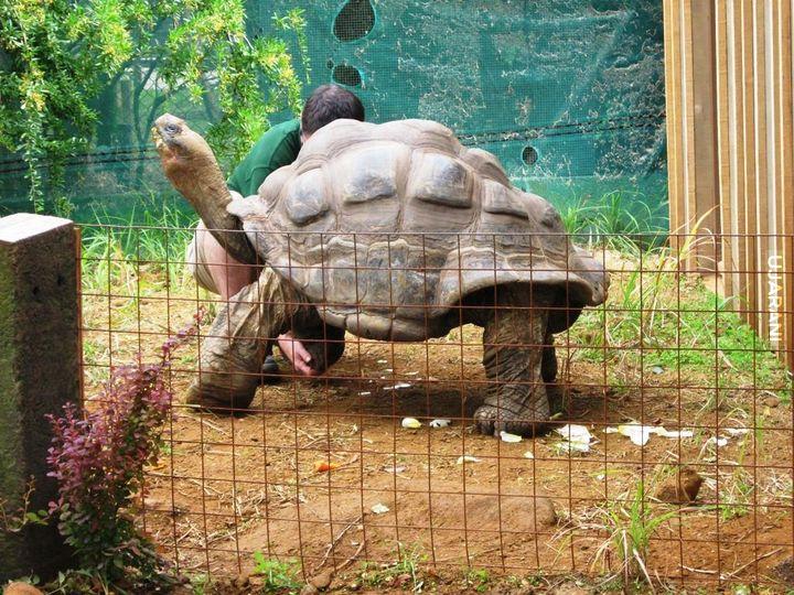 Malenstwo z londynskiego zoo
