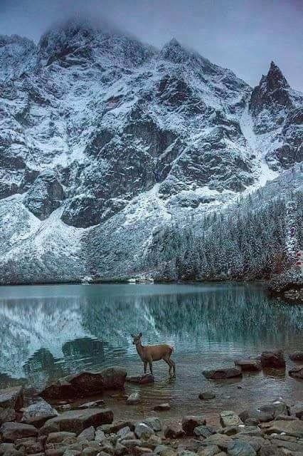 naturą malowane... 2