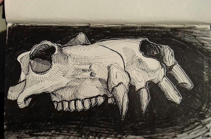 Hippo-Czaszka