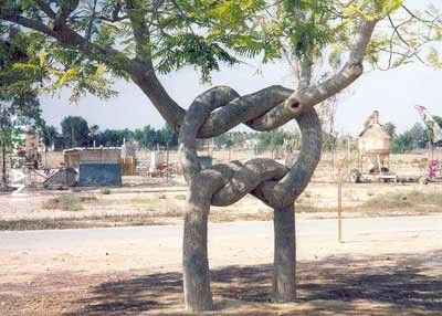 "Axel Erlandson i jego ""Drzewny cyrk"""