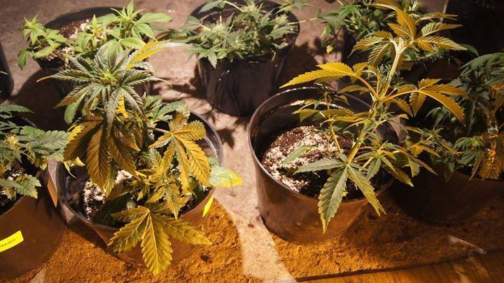 Roślinki 3