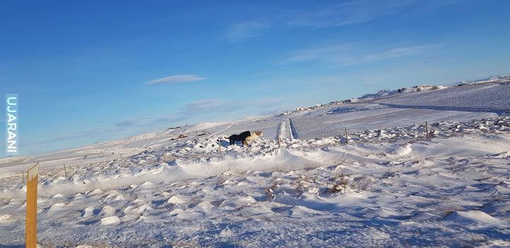 Z Islandii zdjęć kilka