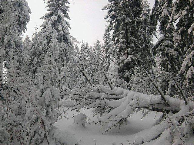 Zima na Podkarpaciu (Styczeń-Luty 2017)