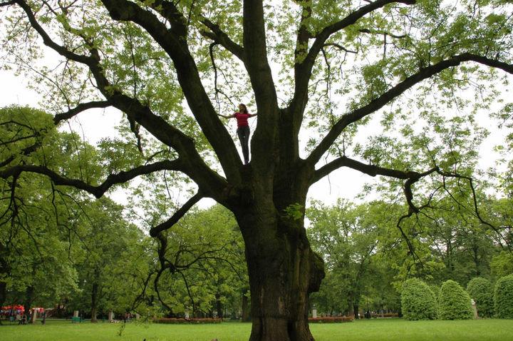 """""""365 Drzew..."""