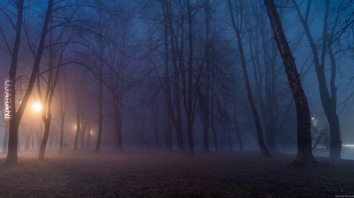 Mroczny las w miejskim parku