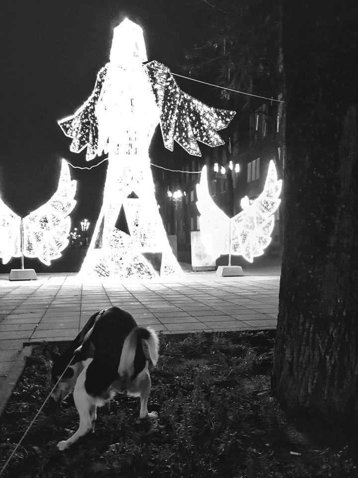 Fotografię dedykuję osobom odpowiedzialnym za tegoroczny, świąteczny wystrój Placu Centralnego w Nowej Hucie.
