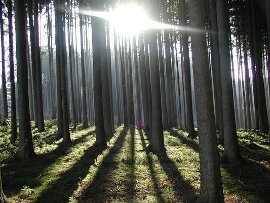 Historia drzew..; no i świateł..