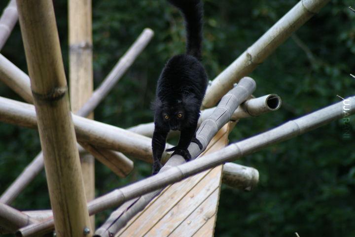 Ogród zoologiczny w Libercu, Czechy