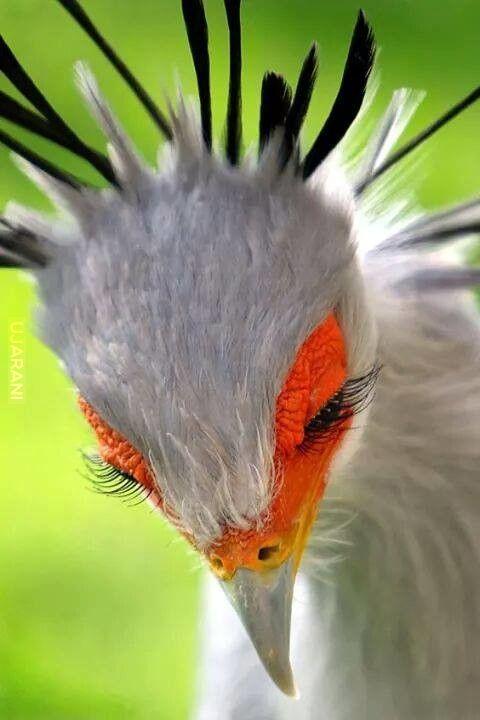 Ptasior