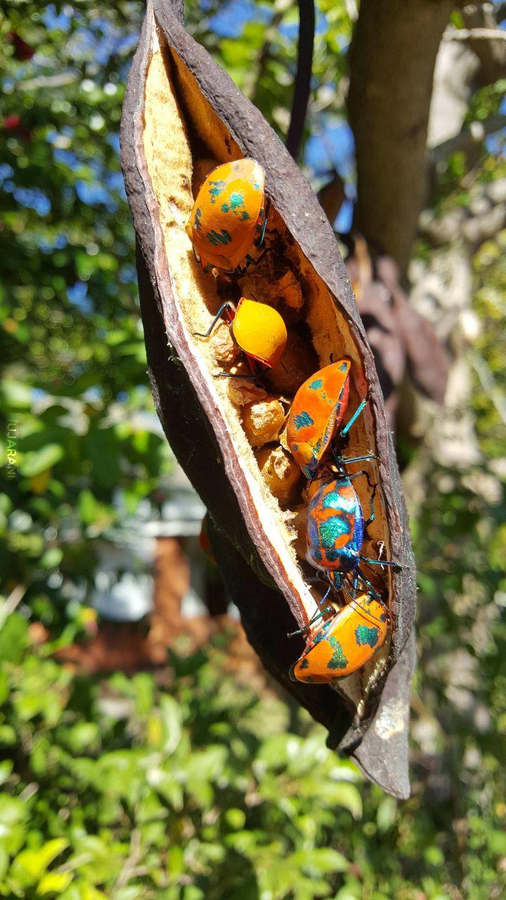 Żuczki jedzą nasiona