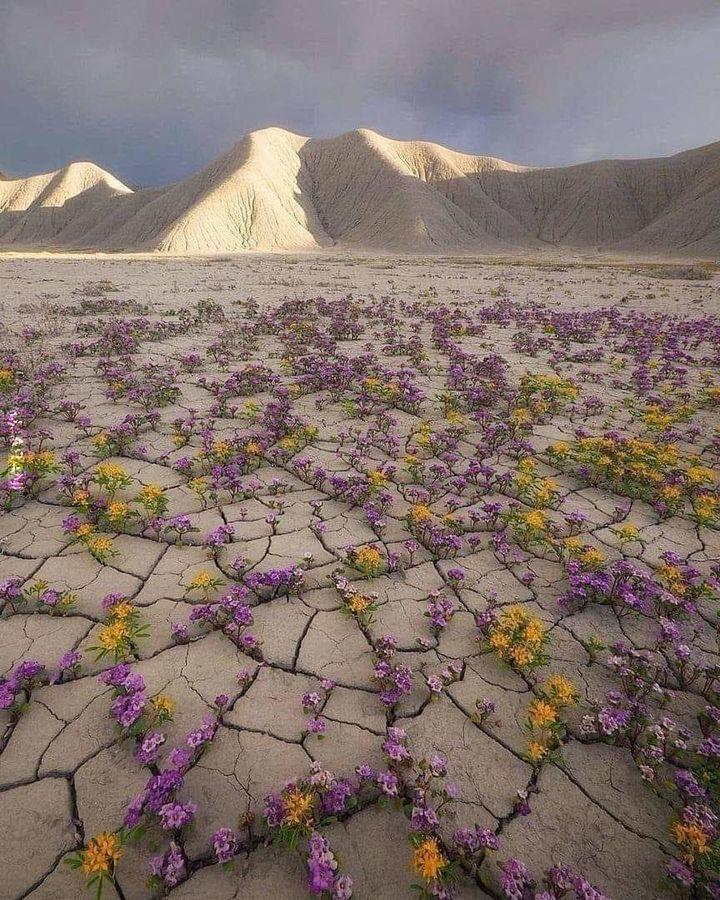 I na pustyni czasem kwiat zakwitnie
