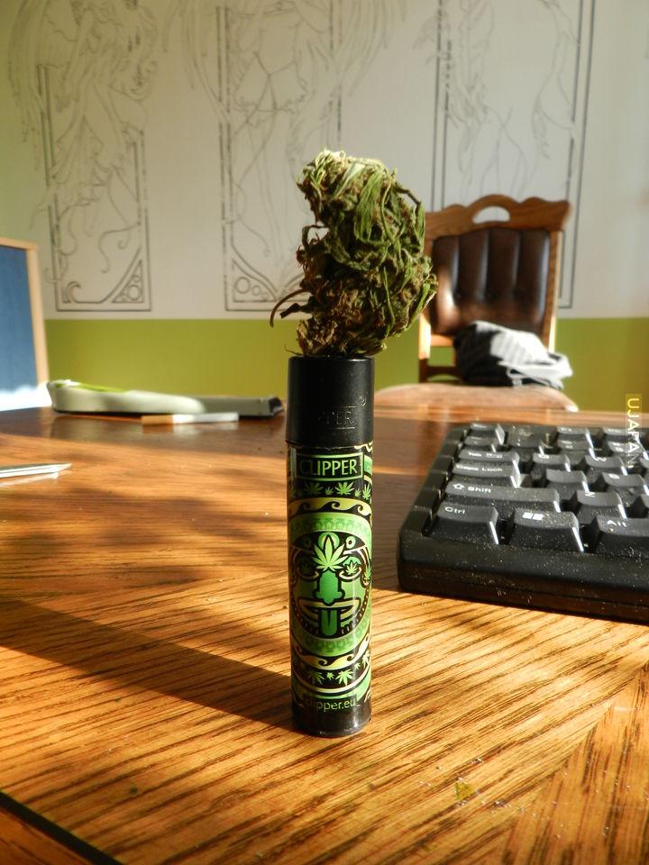 Zielony płomyk :)