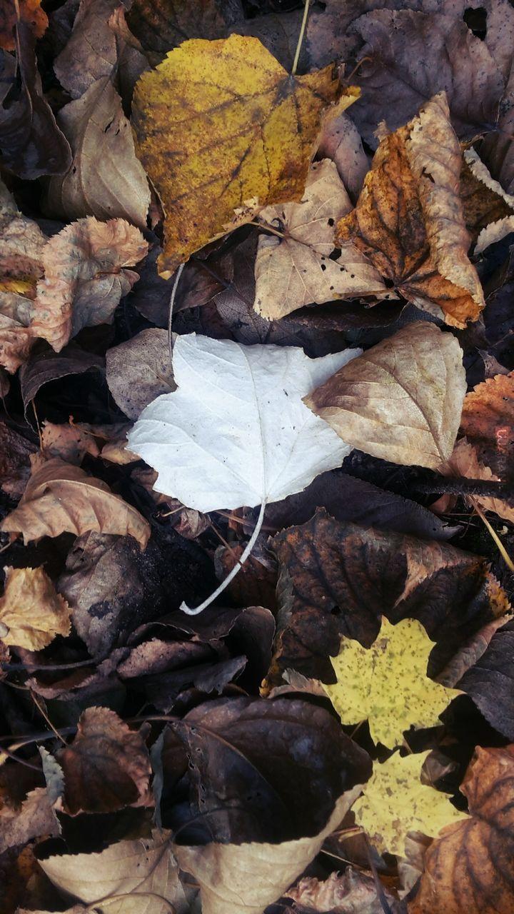 Biała, polska jesień