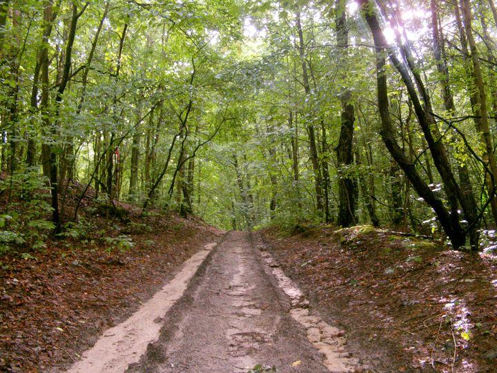 Moja wyprawa na leśne fotografie
