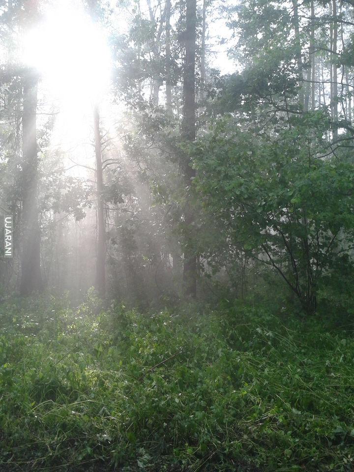 Moja okolica po zeszłorocznym gradobiciu i ulewie, las niedaleko domu.