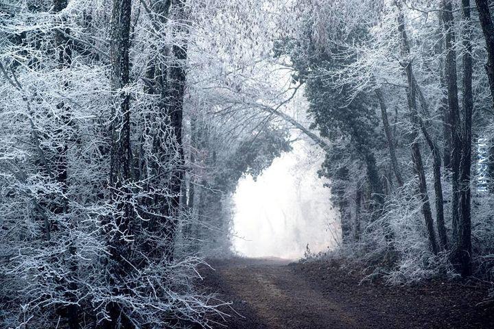 Leśny klimat (62) Zimową porą