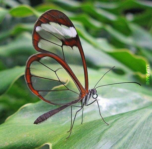 Cud natury