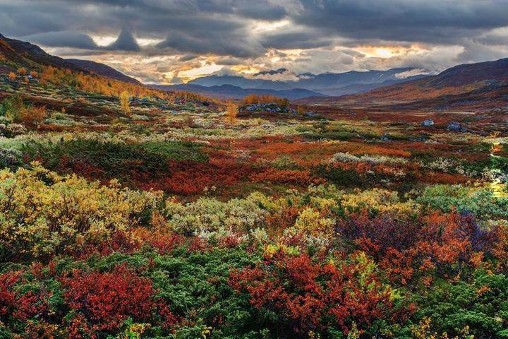 Natura w północnej Szwecji.