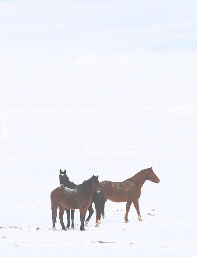 Konie pośród niczego...
