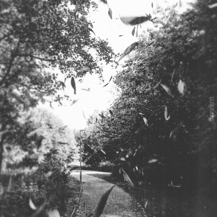 Eliburn Park