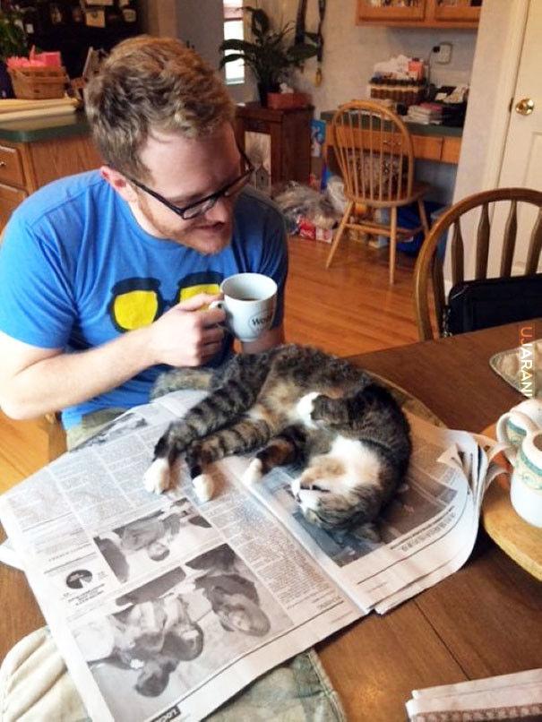 Koty, które potrzebują Twojej uwagi dokładnie wtedy, kiedy zaczynasz czytać :)