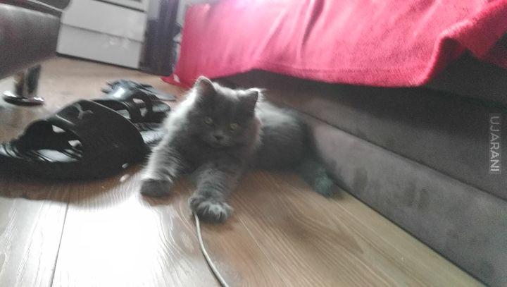 nowy członek rodziny :)