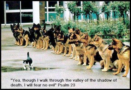 Kociażbym chodził ciemną doliną psa się nie ulęknę...