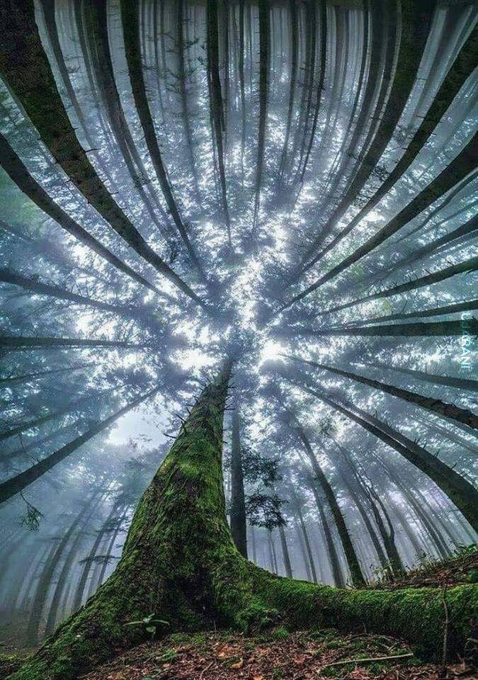 Leśny klimat (68)