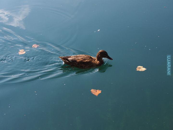 Jezioro Bled cd..:)