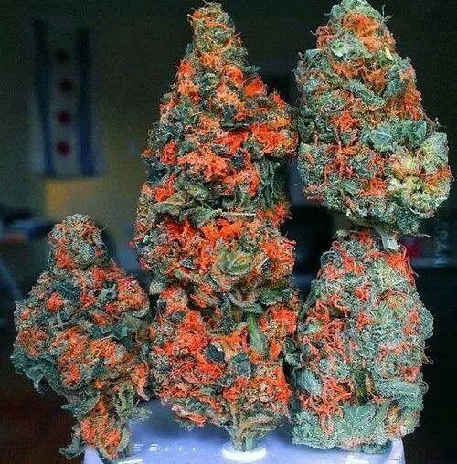 pomarańczowo