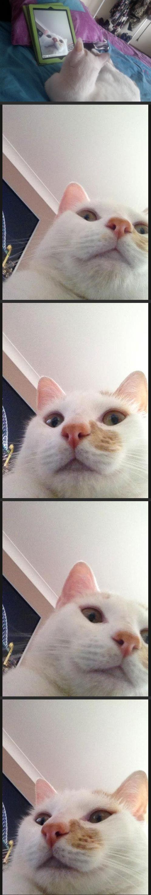 Jestem pięknym kotem