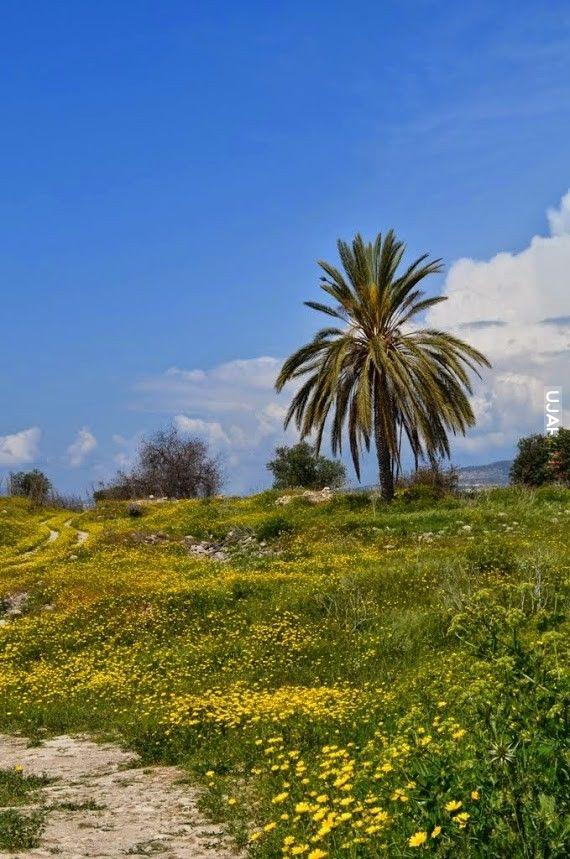 Cypr w marcu - własne