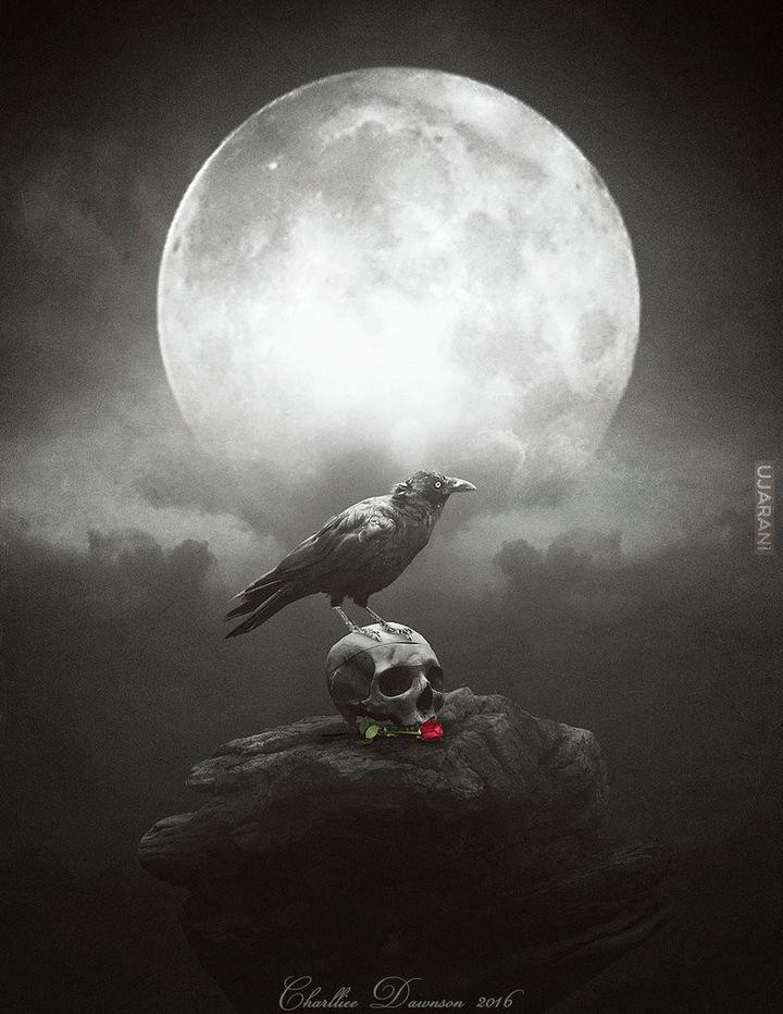 Dark crow.