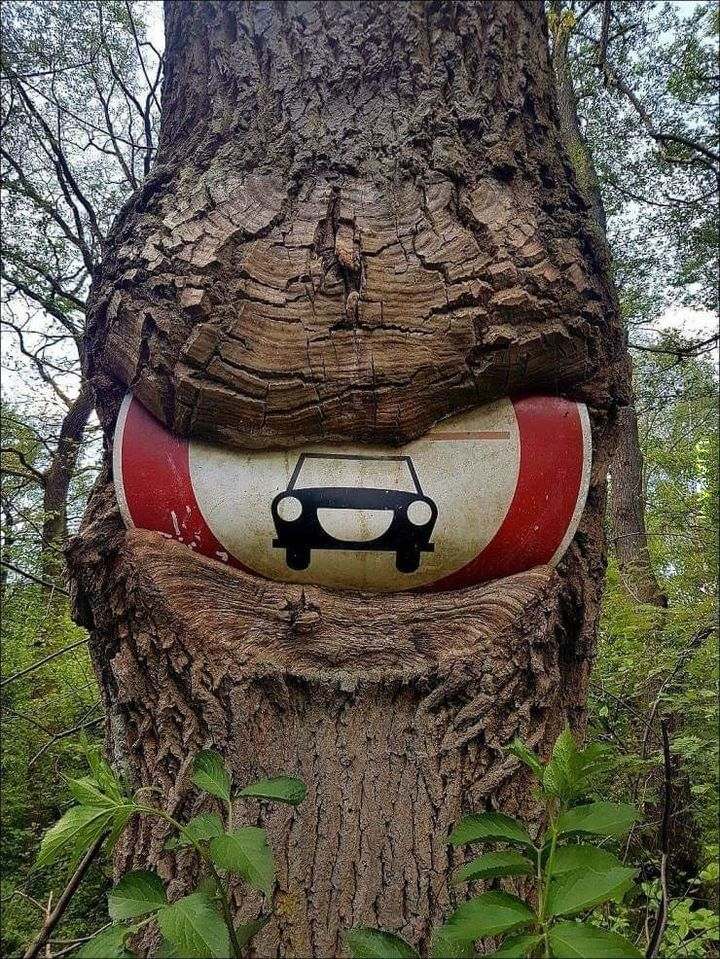 Kiedy natura odzyskuje swoje prawa.