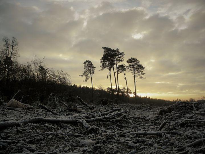 Był sobie las....powiedzieli że odrośnie.