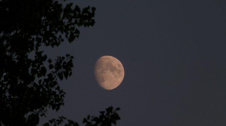 Księżyc w towarzystwie drzewa