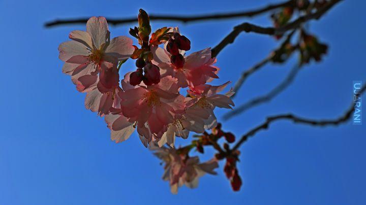 Nareszcie wiosna!