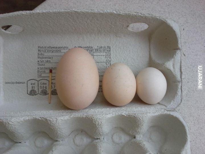 Ale Jajca..