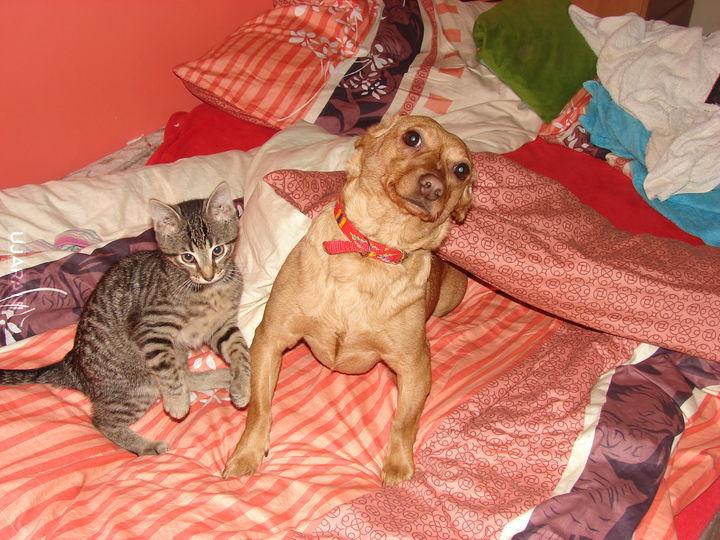 Pies z kotem :)