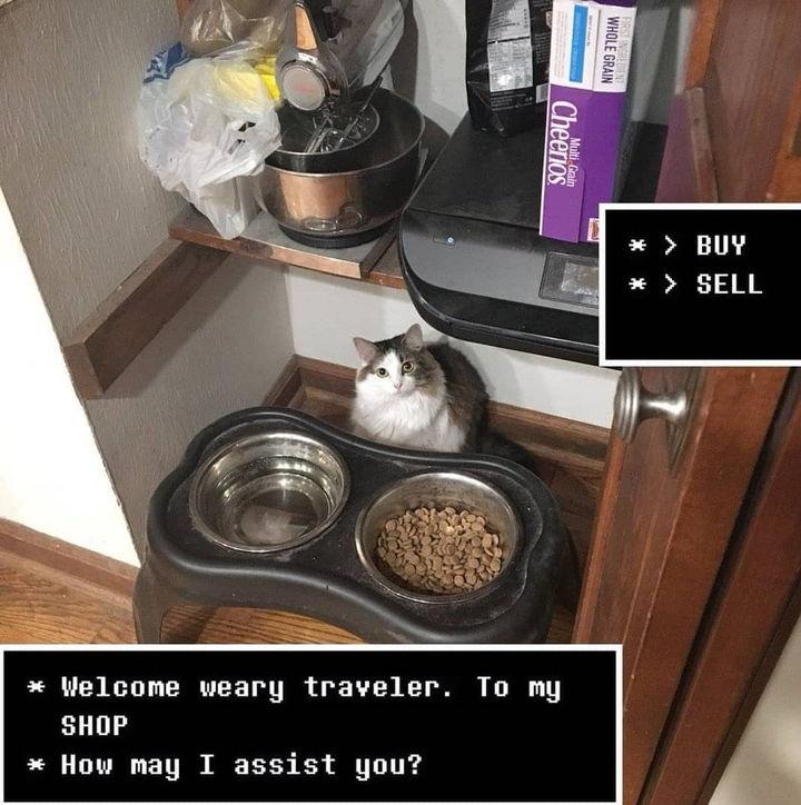 Pokaż mi swoje towary, kocie