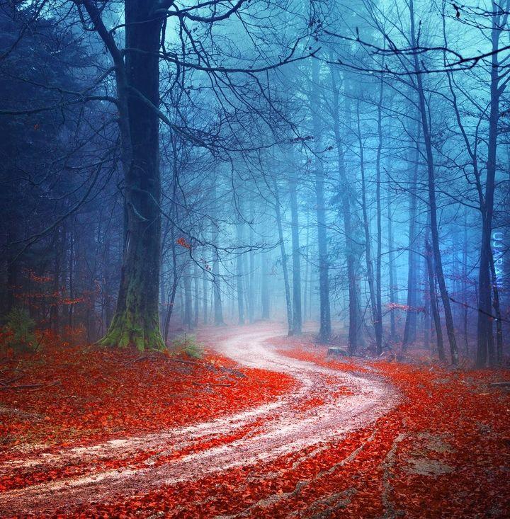 Leśny klimat (61)