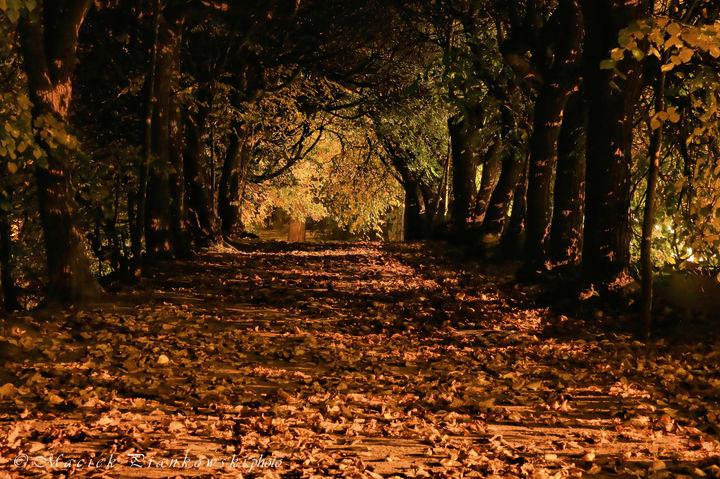 Park Oliwski jesienią czyli teraz