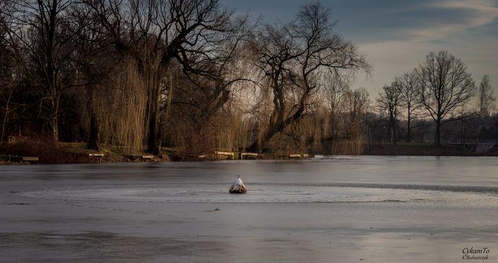 W Parku Śląskim