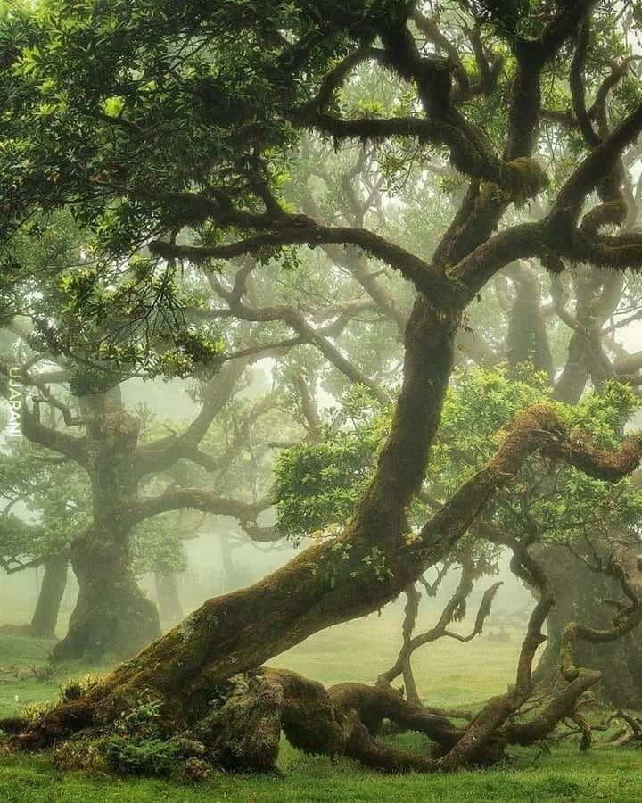 Historia drzew (41)
