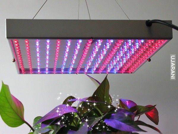 HPS vs LED
