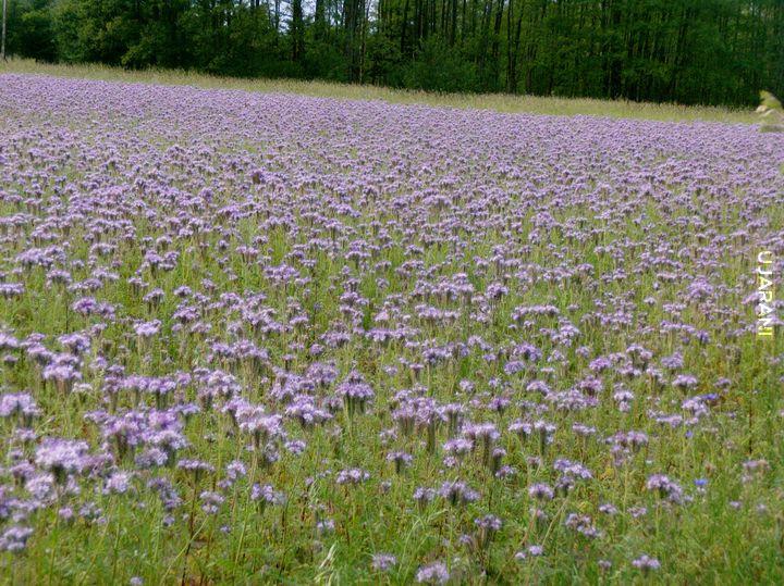 'Łąka pełna kwiatów'