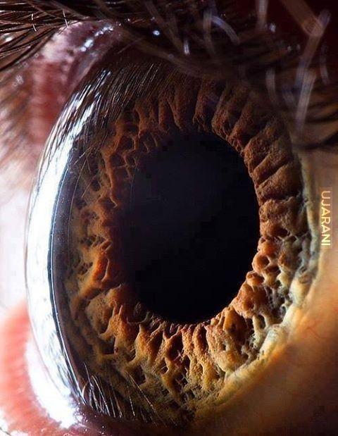 Oko z bliska.