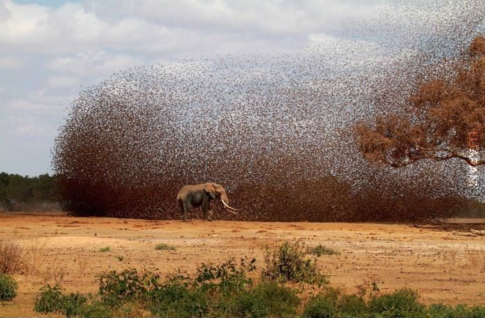.słoń