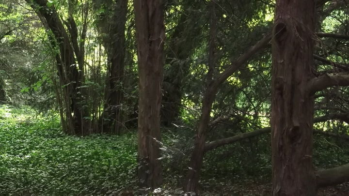 Park przy zamku kórnickim